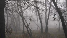 有雾的森林或公园秋天风景全景 股票视频
