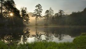 有雾的森林日出 库存照片