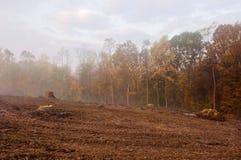 有雾的森林早晨 免版税图库摄影