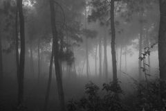 有雾的森林早晨 库存图片
