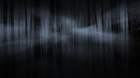 有雾的森林晚上 库存图片