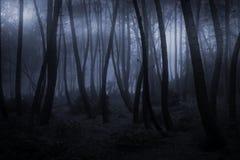 有雾的森林晚上 图库摄影
