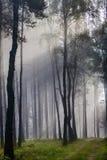 有雾的森林有薄雾老 免版税库存图片