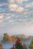 有雾的森林横向 免版税库存照片