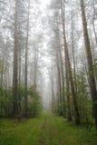 有雾的森林波兰 免版税库存照片