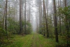 有雾的森林波兰 免版税库存图片