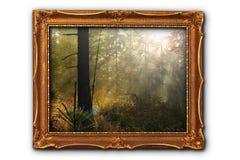 有雾的森林的图象 免版税库存图片