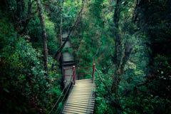 有雾的森林神奇风景有木桥的 免版税图库摄影