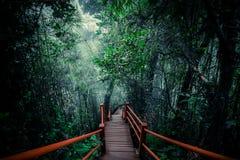 有雾的森林神奇风景有木桥的 免版税库存图片