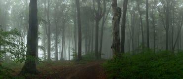 有雾的森林童话鬼的看的森林全景在上午 免版税库存照片
