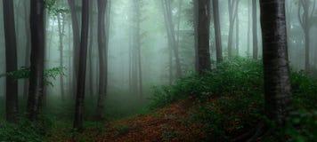 有雾的森林童话鬼的看的森林全景在上午 免版税库存图片