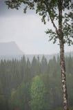 有雾的森林视图 免版税库存图片