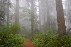 有雾的森林路径 免版税图库摄影