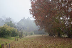 有雾的森林风景 库存图片