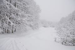 有雾的森林滑雪轨道 免版税库存照片