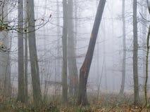 有雾的森林 免版税库存照片