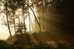有雾的横向早晨神秘主义者 库存照片