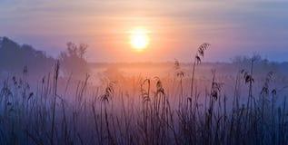 有雾的横向 在草甸的清早 浅深度的域 免版税库存图片