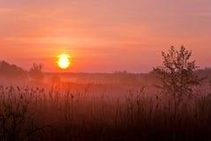 有雾的横向 在草甸的清早 库存图片
