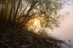 有雾的横向 早期的薄雾早晨 库存照片