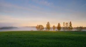 有雾的横向 早期的薄雾早晨 免版税库存图片