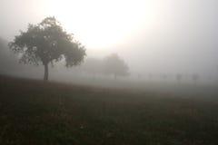 有雾的横向 库存图片