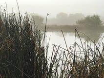 有雾的池塘 免版税库存图片