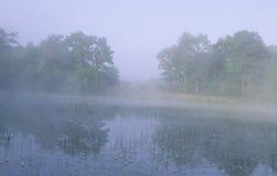 有雾的池塘 库存照片