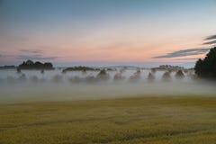 有雾的油菜领域全景  库存图片