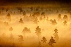 有雾的沼泽风景 免版税库存照片