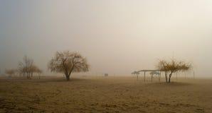 有雾的海滩 库存照片