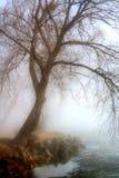 有雾的湖早晨 免版税库存图片
