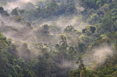 有雾的热带雨林 免版税图库摄影
