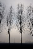 有雾的由后照的树 免版税库存照片