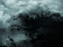 有雾的神奇森林和拷贝空间的黑暗的树区域 免版税库存图片