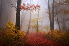 有雾的神秘的森林 库存图片