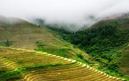 有雾的神秘的米大阳台风景在龙胜,中国 免版税库存照片