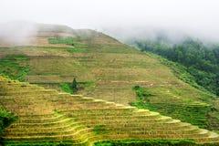 有雾的神秘的米大阳台风景在龙胜,中国 免版税库存图片