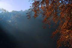 有雾的秋天早晨在森林里 库存照片