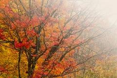 有雾的秋天森林。 免版税图库摄影