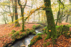 有雾的秋天森林 库存照片