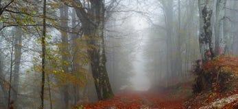 有雾的秋天路径 免版税库存照片