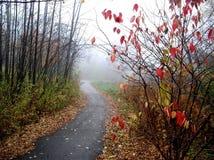 有雾的秋天 库存图片