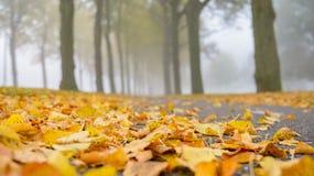 有雾的秋天 图库摄影