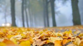 有雾的秋天 免版税库存照片