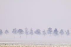 有雾的结构树 免版税图库摄影