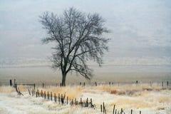 有雾的结构树 免版税库存照片