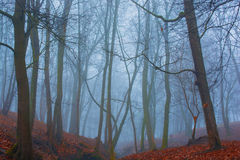 有雾的美丽的奥秘森林和在地面上的秋叶 库存照片