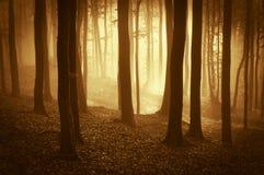 有雾的美丽的森林在日出 库存图片