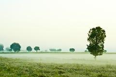 有雾的草原 免版税库存照片